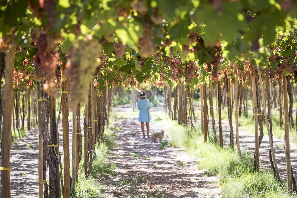 Le Chili par ses vignes – Exposition photo